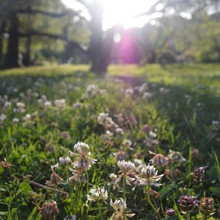 Ep108 Micro-Clover: What is it and why should you use it?