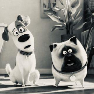 Radio ScreenWeek #8 - Pets 2 porta nel cinematografo i nostri migliori amici