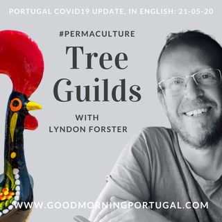 Portugal Covid news & weather update PLUS 'Talking Tree Guilds'