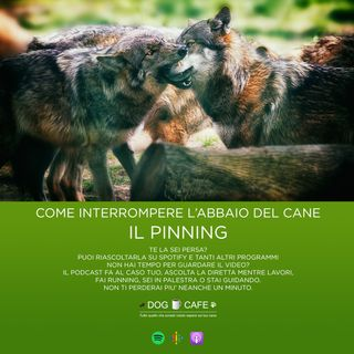#015 - Come interrompere l'abbaio del cane: il PINNING