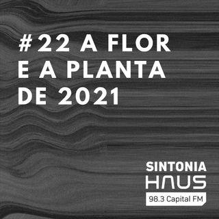 Tendências: conheça a planta e a flor do ano de 2021 | Sintonia HAUS #22