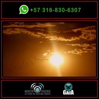 NUESTRO OXÍGENO El sol no está en cuarentena - Santiago Vargas Domínguez