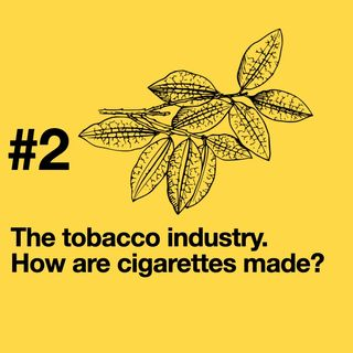 Episode 2: the tobacco industry. What's in a cigarette?