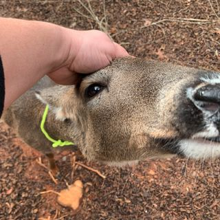 We pet a deer and Duryan tries to tell a joke!