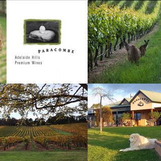 Ep 308: The Reality of the Australian Fires with Paracombe Wines of Adelaide Hills
