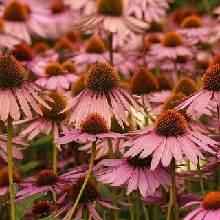DIY GM Ep99 - Longest Blooming Perennials for Your Summer Garden