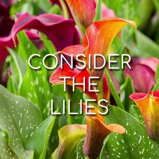 Consider the Lilies - Morning Manna #3062