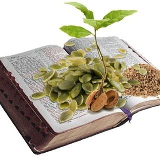 Sowing the seed Gods Word 1