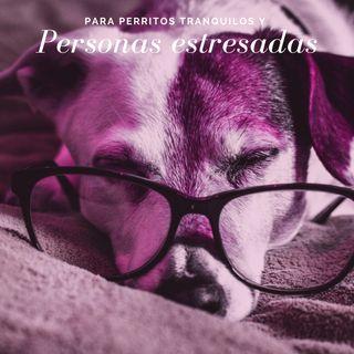 Para perritos tranquilos y personas estresadas Vol. 1