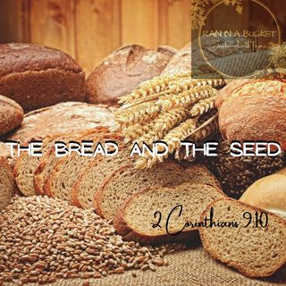The Bread And The Seed