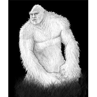 Bigfoot Witnesses Tell Their Encounters