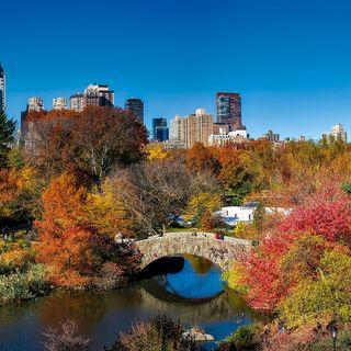 #22 Come gli alberi salveranno le nostre città