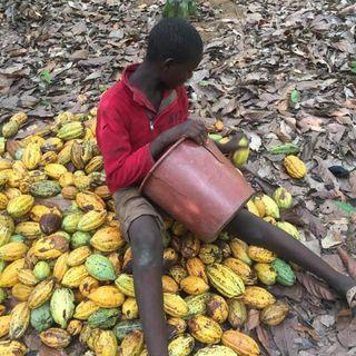 Børnearbejde i din Fairtrade chokolade