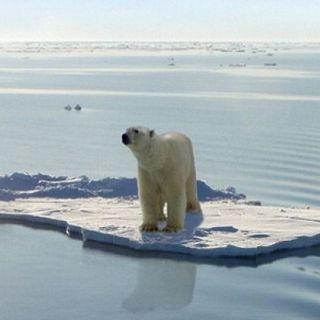 Quali sono i rischi dello scioglimento dei ghiacci artici?