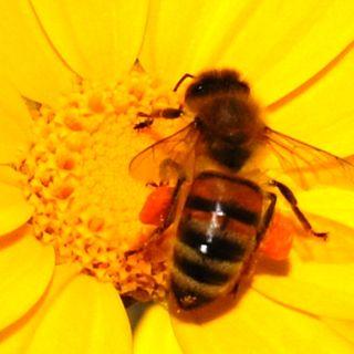 Giornata mondiale delle api .  Le news da Londra - E indovinate l'oggetto misterioso