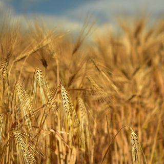 Laudato Sì: nutrizione ed ecologia integrale
