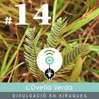 14 | Les plantes, més intel·ligents del que pensem, amb Alba Tous Fandos