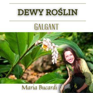 Dewa Roślin - Galgant - Potrzebujesz pewności siebie, siły, mocy? | Maria Bucardi
