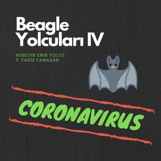 BEAGLE YOLCULARI IV