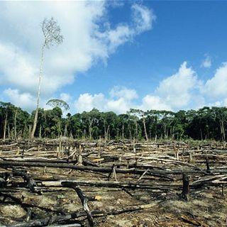 Banche britanniche nel mirino per i finanziamenti alla deforestazione
