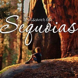Spring in California's Sequoia Country - 2018: Big Blend Radio Interview