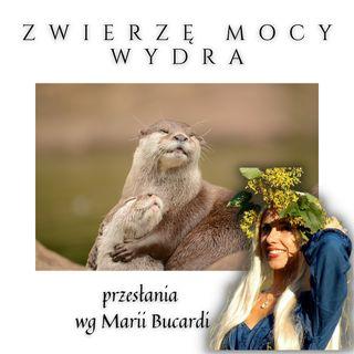 Zwierzę Mocy - Wydra - płyń z prądem życia! | Marią Bucardi