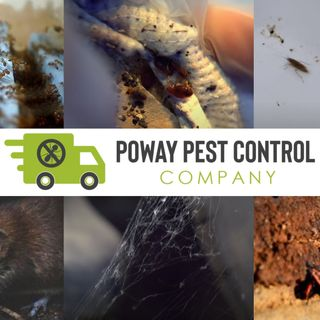 Pest Control Services In Poway, Californ