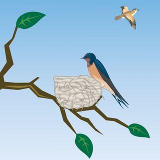 L'uccellino che non voleva volare-Storia per affrontare le responsabilità