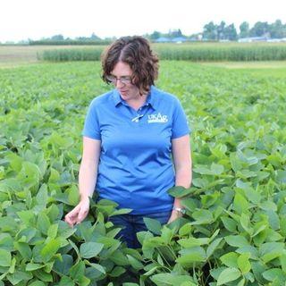 Carrie Knott, KY soybean report