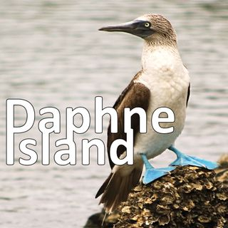 Daphne Island: a tiny spec of life in the middle of nowhere