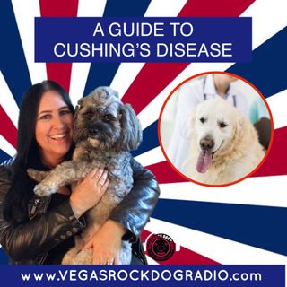 A Guide To Cushing's Disease In Dogs