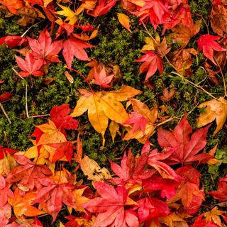 Episode 69 - Why Do Leaves Change Colour ?