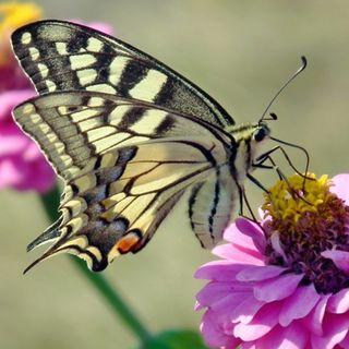 Alas de las mariposas blindan tarjetas bancarias