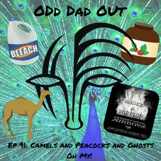ODO 91: Camels and Peacocks and Ghosts, Oh My!