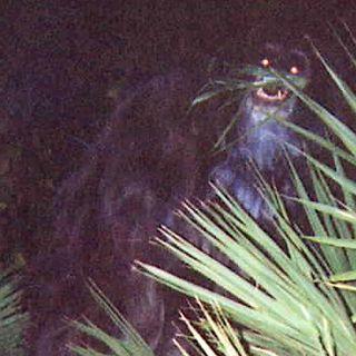 Episode 4 - Skunk Ape