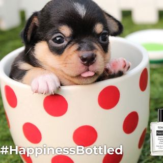 How Do You Bottle Puppy's Breath