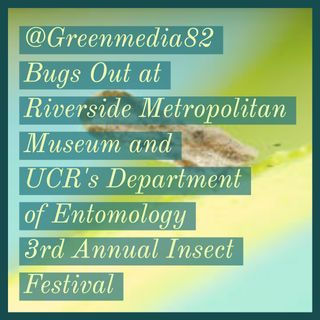 @GreenMedia82 Bugs Out at the Riverside Metropolitan Museum