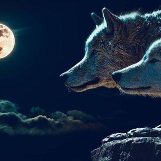 La VERA storia dei due lupi