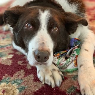 Red's Story, Grieving For Animals