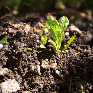 Toprak Elementi (Boğa-Başak-Oğlak) His Yüklemesi