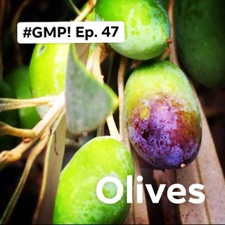 Olives - The 'Good Morning Portugal!' Podcast - Episode 47