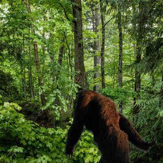 As People Begin To Enjoy The Outdoors Again After Lockdowns, Bigfoot Sightings Return...
