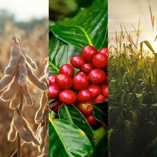 14/10/2021 - Estimativas para safras de soja, milho e café