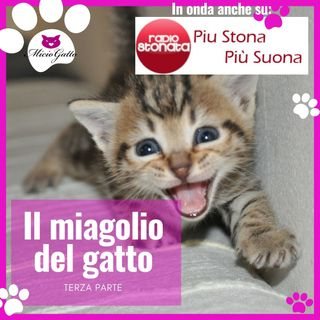 Il miagolio del gatto - TERZA PARTE - perché il gatto miagola e come - in onda su Radio Stonata