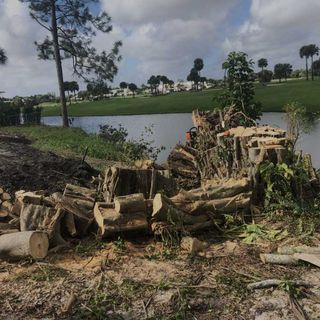 Tree Removal Miramar | Fort lauderdale Tree Removal | Tree Service