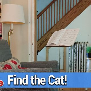 This Week in Google 578: Find the Cat