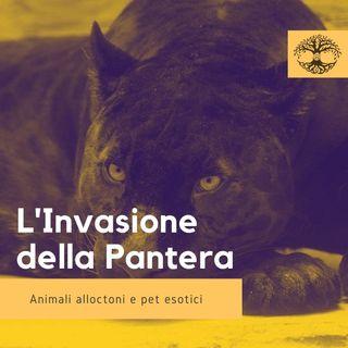 L'Invasione Della Pantera: Impronta Animale