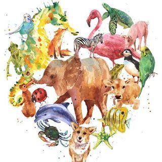 La comunicazione intuitiva con gli animali. Presentazione del libro di Andrea Contri