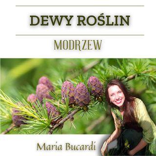 Dewy Roślin - Modrzew - Jak zwiększyć pewność siebie, wiarę we własne siły | Maria Bucardi
