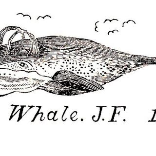 Thar She Blows: The History of Whales and America